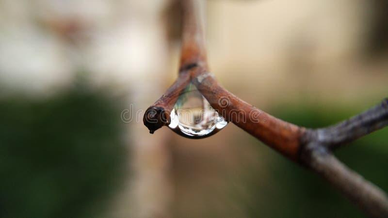 Peu de baisse de pluie photo stock