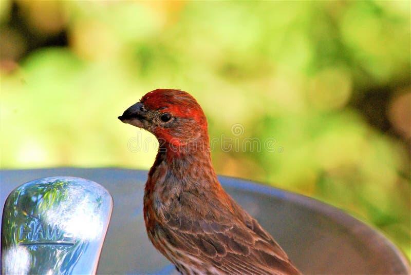 Peu de birdie images libres de droits