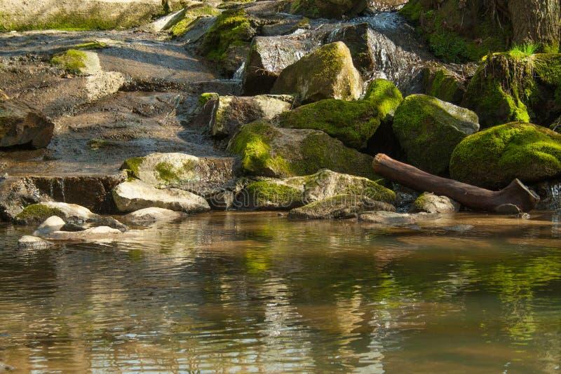 Peu de cascade dans les bois image stock