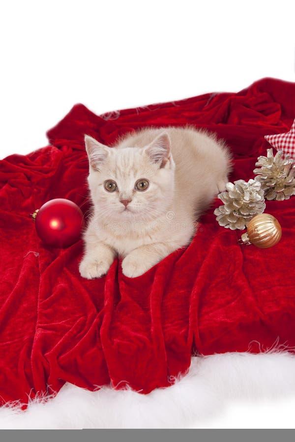 Peu de chaton britannique de shorthair se trouvant avec la décoration de Noël photo libre de droits