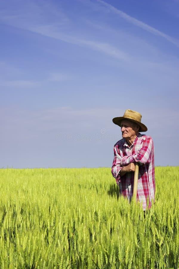 Peu de coupure de travail dans le domaine de blé photographie stock