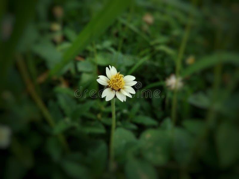 Peu de fleur image libre de droits