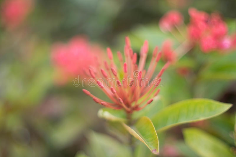 Peu de fleur photos stock