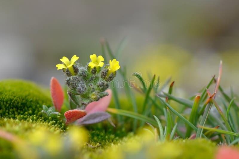 Download Peu De Fleurs De Ressort Sur Le Champ Image stock - Image du concept, instruction: 56477215