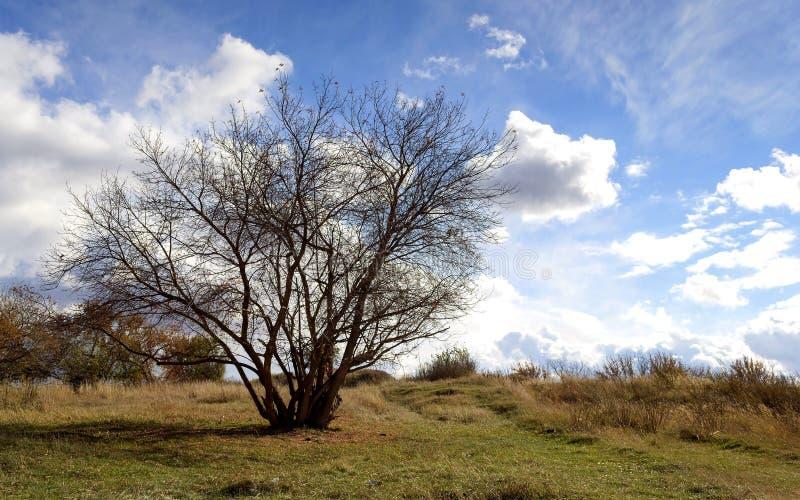 Peu de forêt photo libre de droits