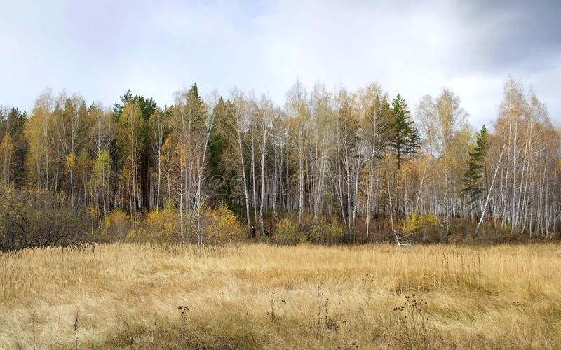Peu de forêt images stock
