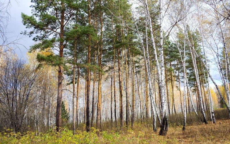 Peu de forêt image libre de droits
