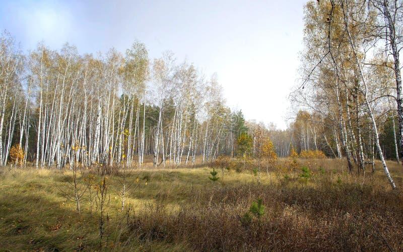 Peu de forêt photo stock