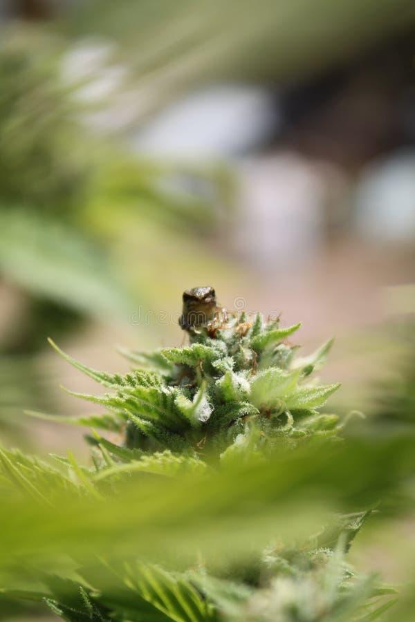 Peu de Froggy photos libres de droits