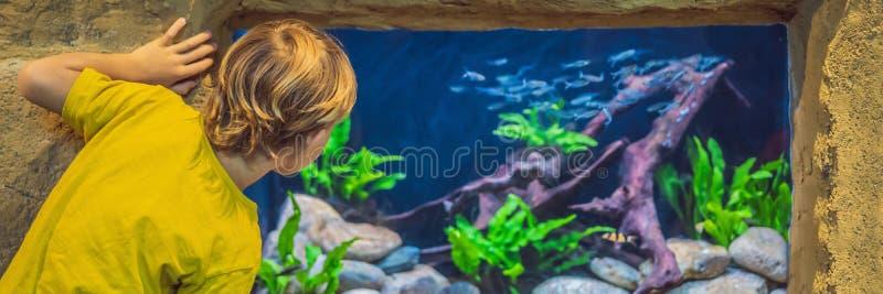 Peu de gar?on, enfant observant le banc des poissons nageant dans l'oceanarium, enfants appr?ciant la vie sous-marine dans la BAN photographie stock