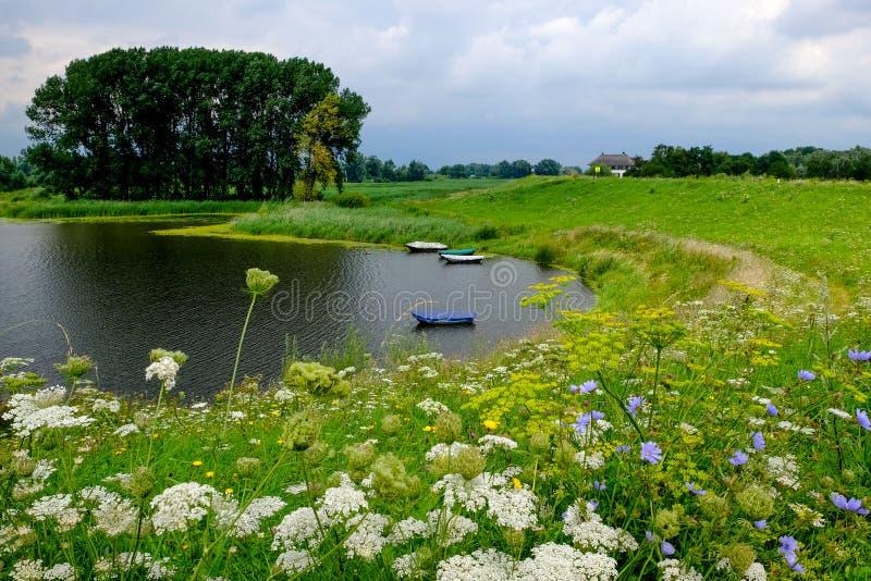 Peu de lac dans le pré avec les fleurs pourpres et jaunes image stock