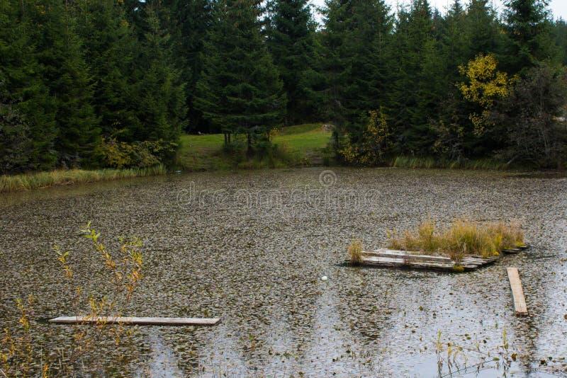 Peu de lac dans les Carpathiens photo stock