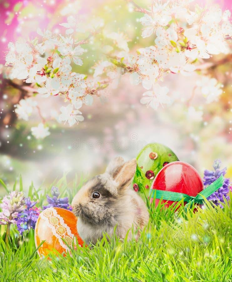 Peu de lapin avec des oeufs de pâques sur l'herbe au-dessus du fond de nature de ressort des arbres fleurissent images libres de droits