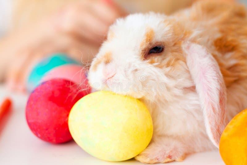 Peu de lapin de lapin avec les oeufs et les marqueurs colorés sur la table fille et garçon blonds sur le fond Prepearing pour Pâq photographie stock libre de droits