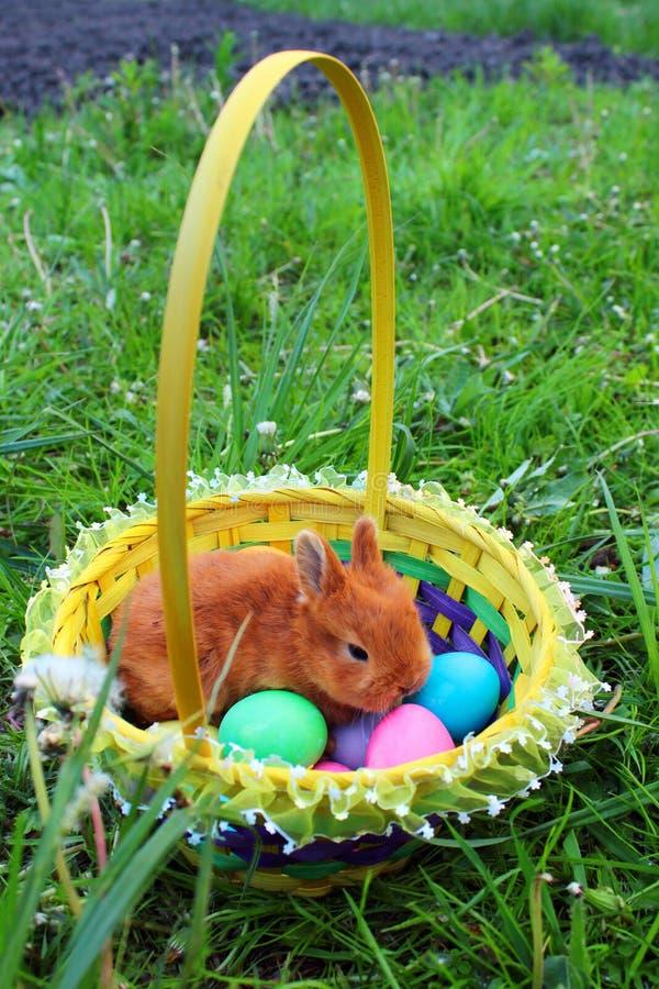 Peu de lapin de Pâques dans un panier avec les oeufs colorés sur la pelouse verte photos libres de droits