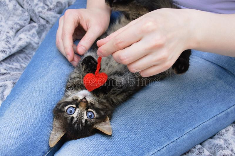 Peu de minou dans les bras d'une fille avec un coeur tricoté de jouet Vue de ci-avant Plan rapproch? image stock