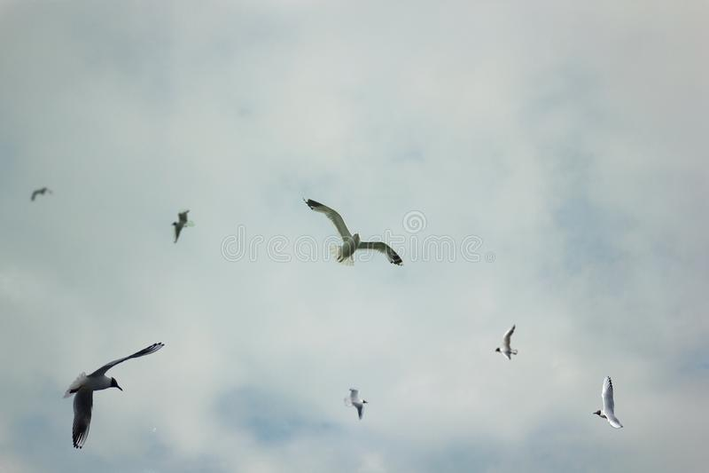Peu de mouettes volant dans le ciel images stock