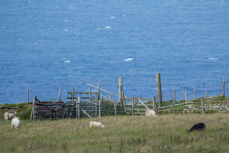 Peu de moutons frôlent près de la barrière sur la colline image libre de droits