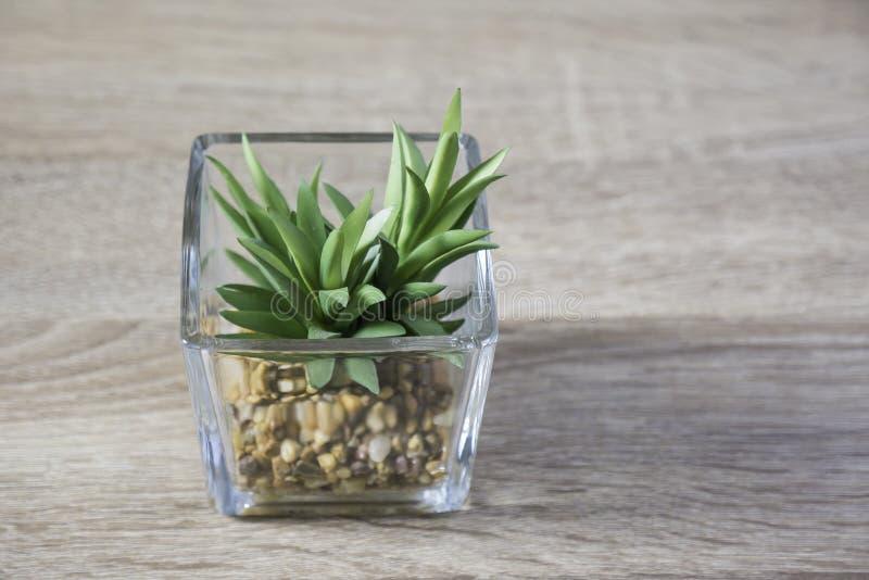 Peu de plante verte dans le pot en verre sur la table image libre de droits