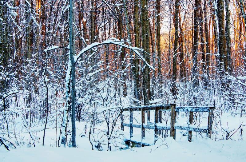 Peu de pont en bois croisant une crique au milieu de la forêt photos stock