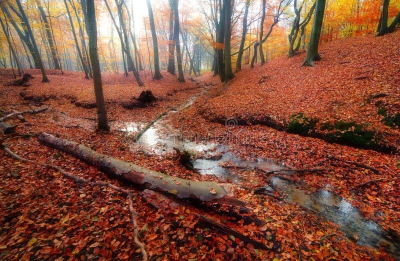 Peu de vapeur dans la forêt photographie stock libre de droits