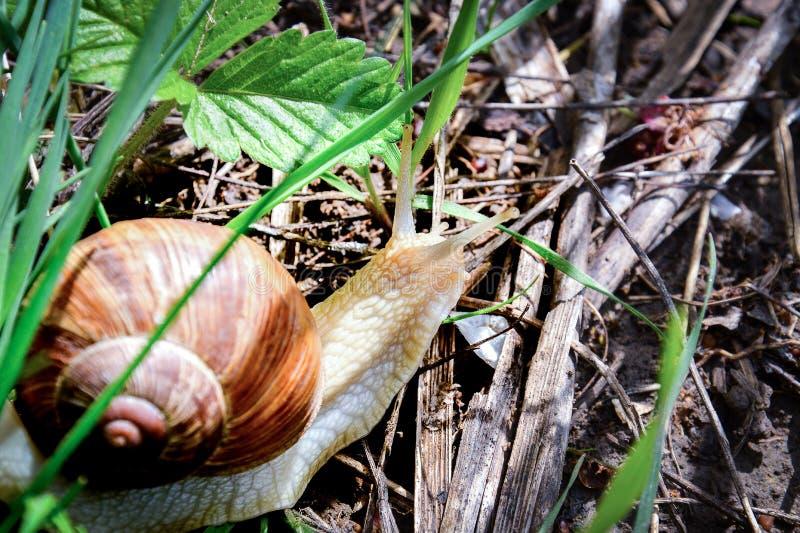Peu escargot voyage au printemps photos libres de droits
