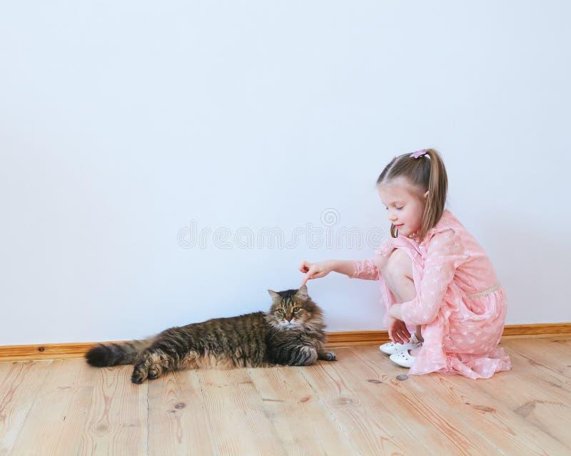 Peu fille jouant avec le chat à la maison images libres de droits