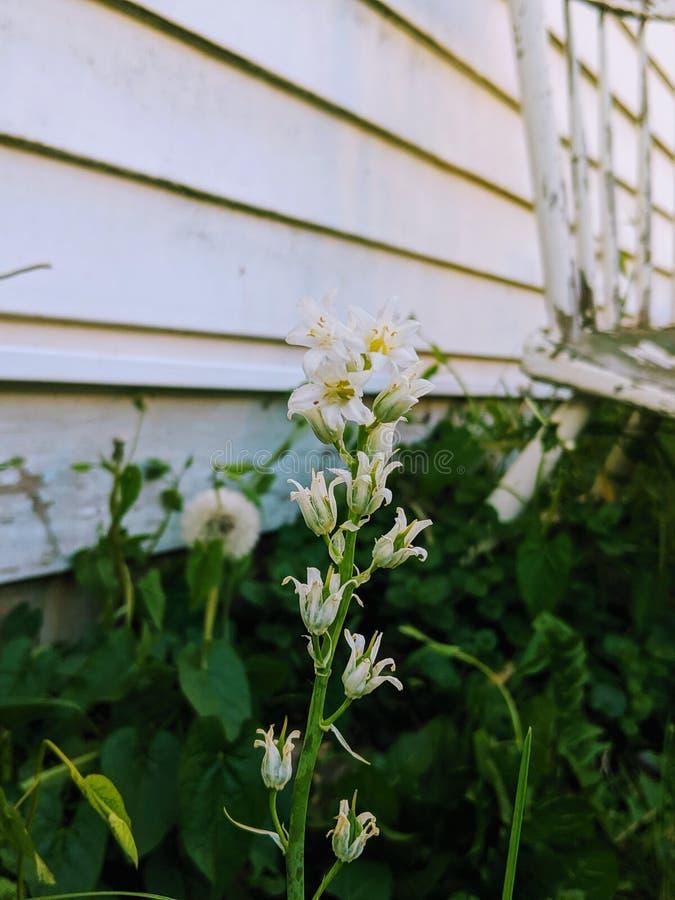 Peu fleur au crépuscule photographie stock