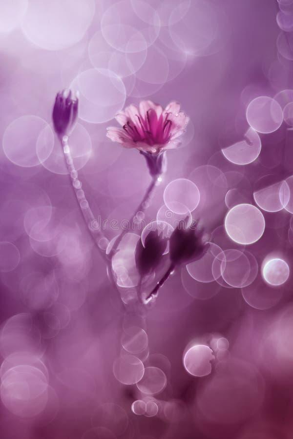 Peu fleur avec le bokeh de bulle images stock