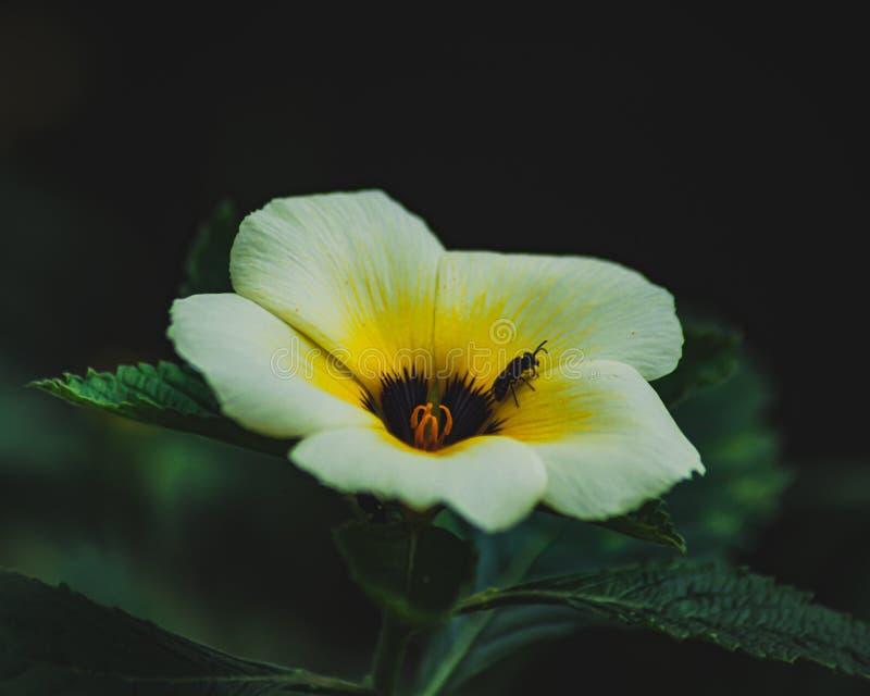 Peu fleur blanche avec un insecte image stock