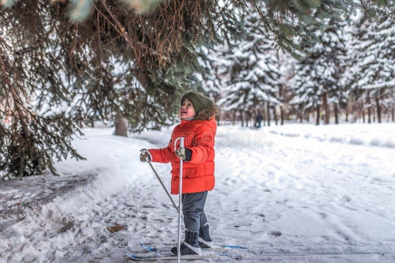 Peu garçon 3-5 années, position heureuse sur skis Dans un chapeau et une veste chauds Les premières étapes dans la forêt A d'hive photo stock
