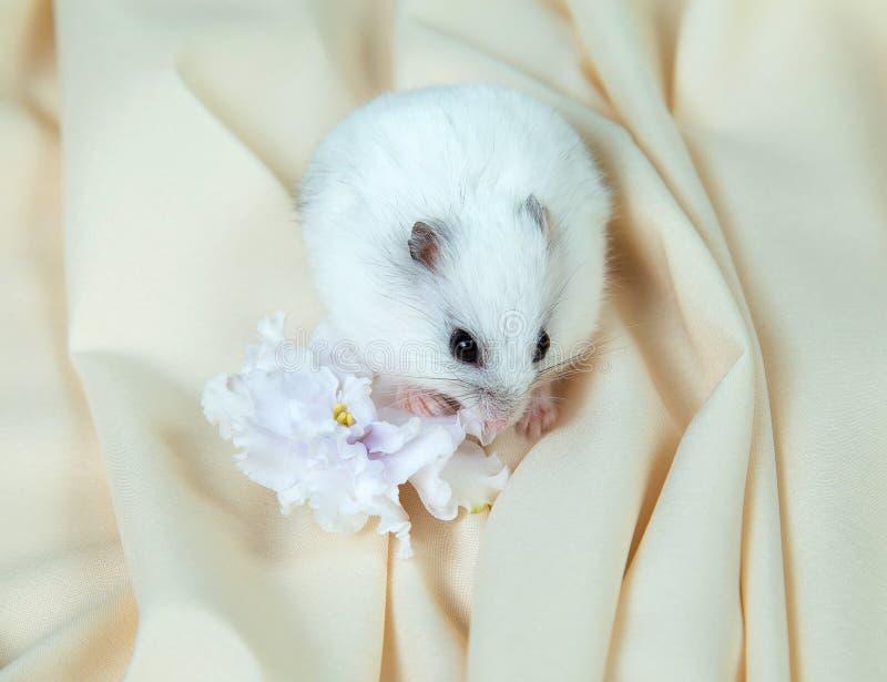 Peu hamster sur un fond clair avec une grande fleur photographie stock libre de droits