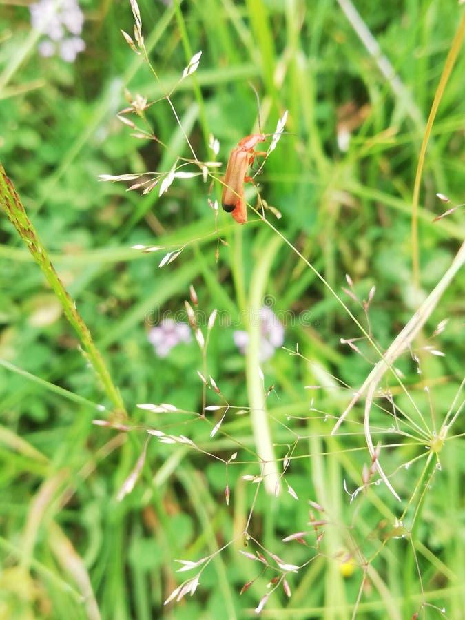Peu insecte de champ images stock