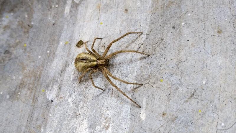 Peu insectes toxiques d'aspect laid photo stock