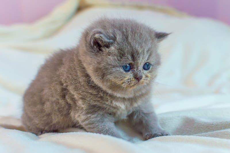 Peu, jeux gris de chaton photos libres de droits