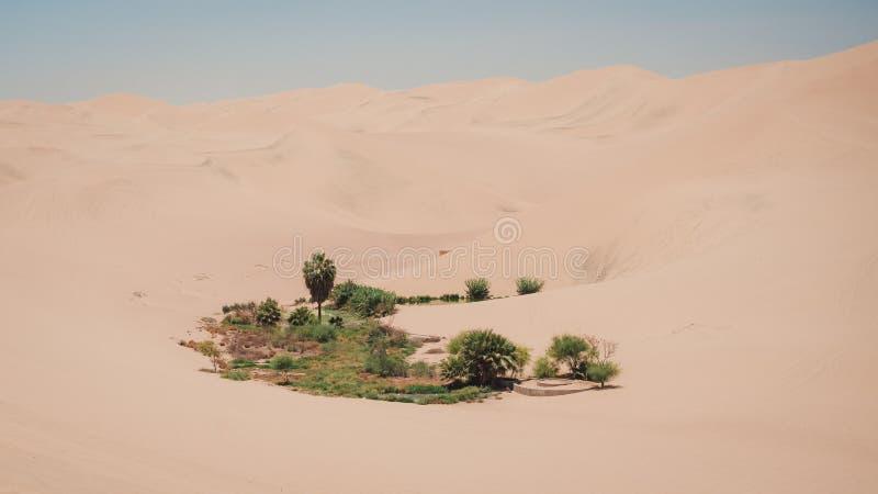 Peu oasis pr?s d'oasis de Huacachina au P?rou photos libres de droits