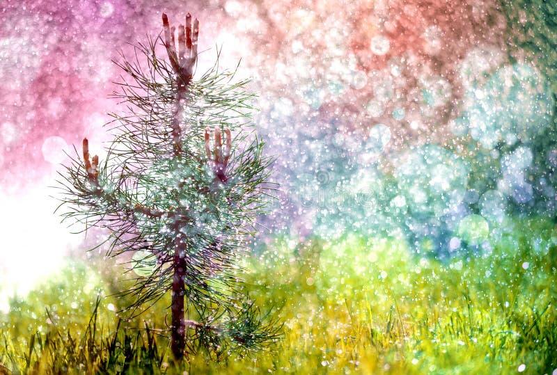Peu pin vert dans l'herbe qui seul se développe dans le jardin illustration de vecteur