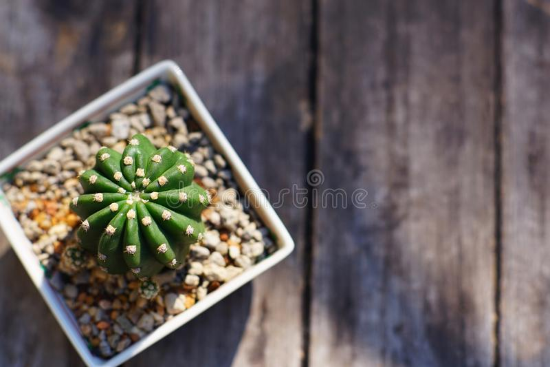 Peu plante en pot de cactus dans le petit pot carré sur la table en bois images libres de droits
