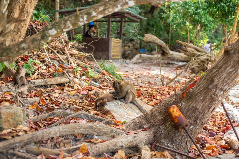Peu singe met bas la vie sur une île tropicale photos libres de droits