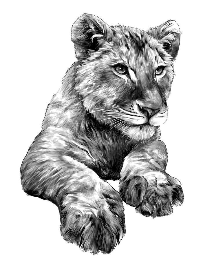 Peu tête et pattes de petit animal de lion illustration de vecteur