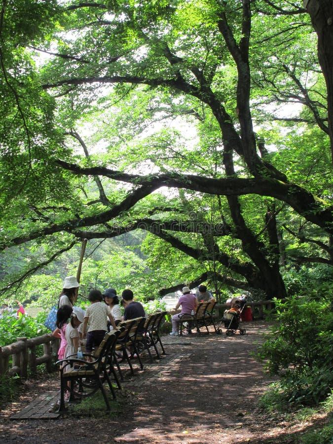 Peuple japonais situant sous le grand arbre images libres de droits