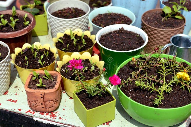 Peuten met spruitjes en kalenders op tuintafel op zonnige dag stock fotografie