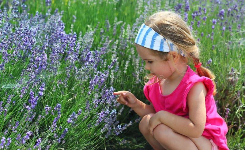Peutermeisje die lavendelgebied voor het eerst onderzoeken stock afbeelding