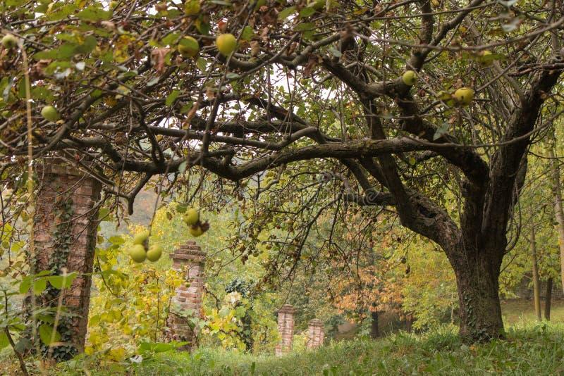 Peveragno Италия стоковое фото rf
