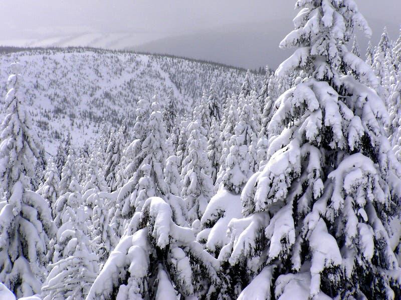 pewnej zimy zdjęcia stock