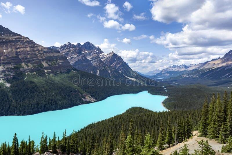 Peyto湖在班夫国家公园,亚伯大,加拿大 免版税库存图片