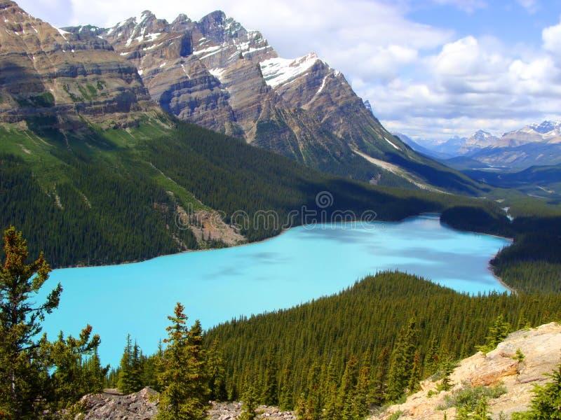 peyto национального парка озера banff стоковые изображения