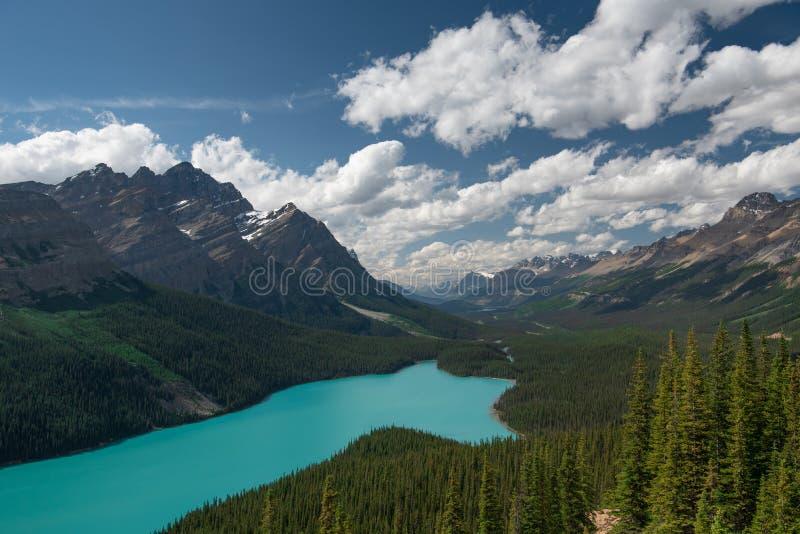 Peyto Banff Jeziorny park narodowy Kanada zdjęcie royalty free