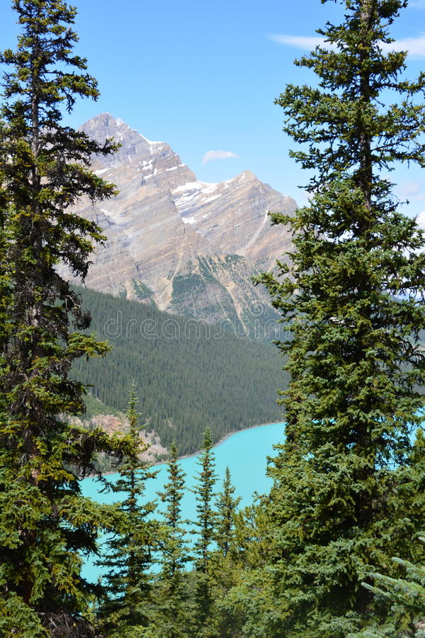 Peyto Lake Canada. Peyto Lake in Alberta Canada stock images