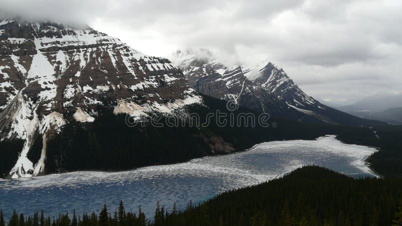 Lake Peyto royalty free stock images